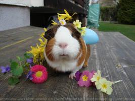 Fritzi 2 (guinea pig) by Calitha-Lena