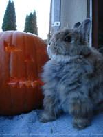 Felix Halloween by Calitha-Lena
