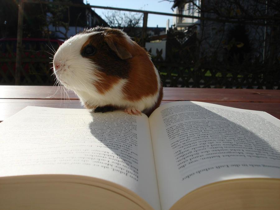 Fritzi read a book - stock