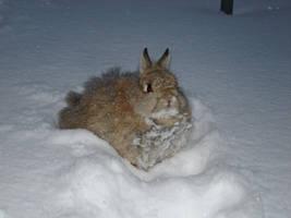 snow bunny Felix by Calitha-Lena