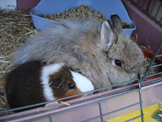 Fritzi and Felix cuddle by Calitha-Lena