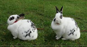 Paulina 6 (bunny) - stock by Calitha-Lena