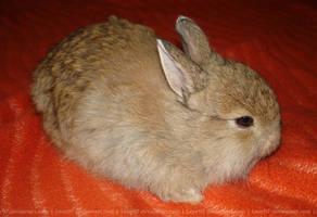 Baby Felix (bunny) by Calitha-Lena