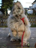 Felix 26 (bunny) by Calitha-Lena