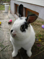 Paulina 7 (bunny) by Calitha-Lena