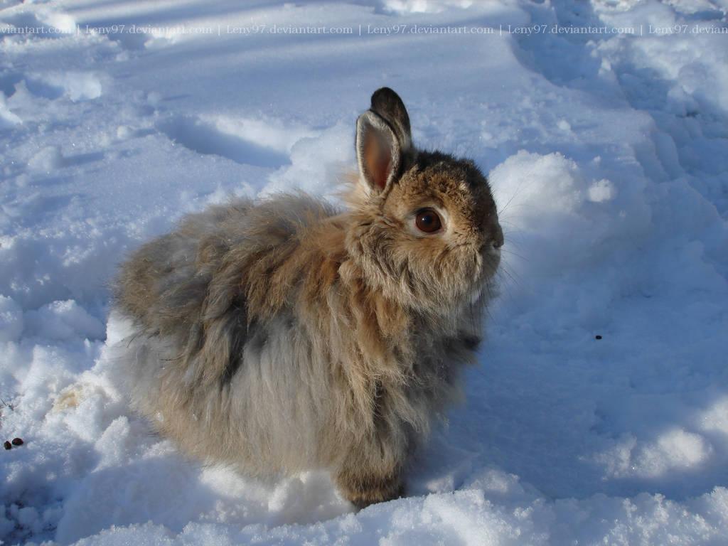 Felix in the snow by Calitha-Lena