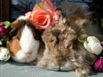 Fritzi and Felix flowerpower