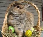 Felix easter bunny - stock