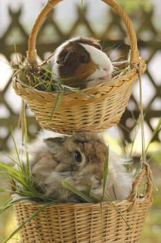 basket full of cuteness