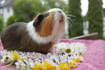Smelling the piggy paradise