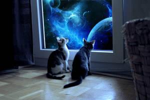 kitties dreams