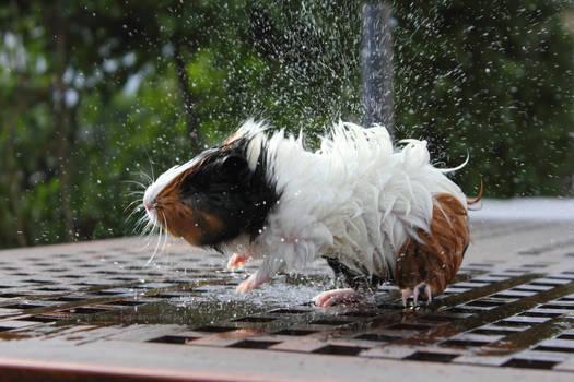 Lollis Splash