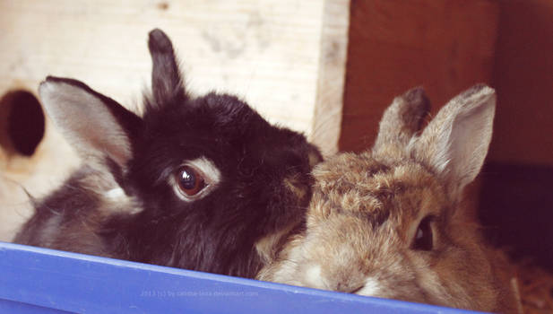 bunny love - and RIP Johnny