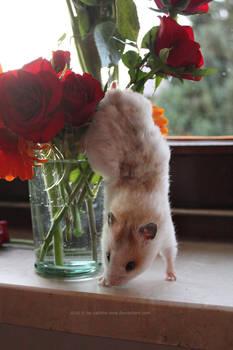 Flowery hamster - stock