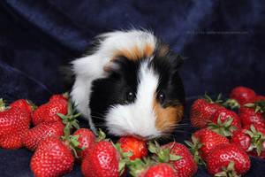 Berry pleasure by Calitha-Lena