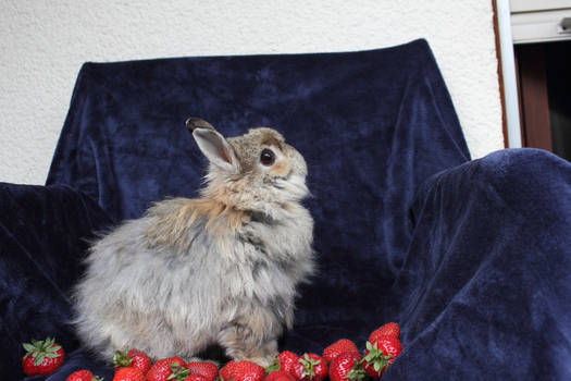 Strawberry stock