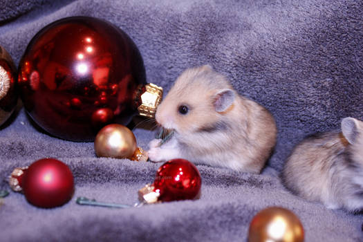 * Merry Christmas 16 *