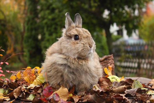 Autumn Felix