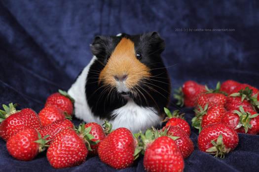Strawberry land