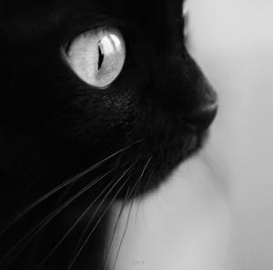 ElenaLaMiez's Profile Picture