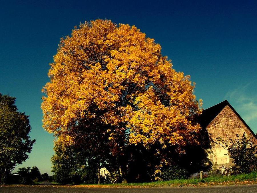 golden tree... by jumpoff-pl