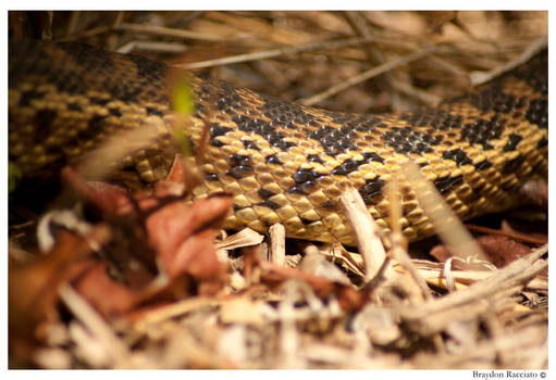 Snakes in the Grass`