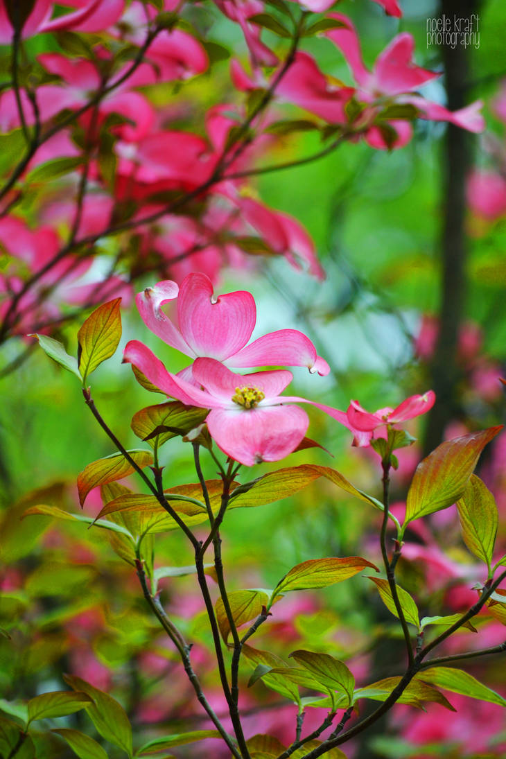 Whispers in Pink