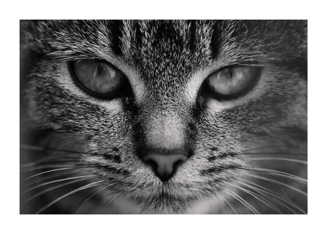 Felinity by GeminiGM