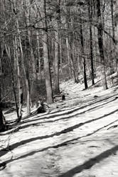 Stock - Winter Forrest