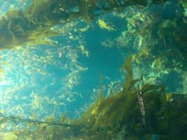 Underwater 2 by greenaleydis-stock