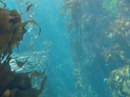 Underwater 4 by greenaleydis-stock