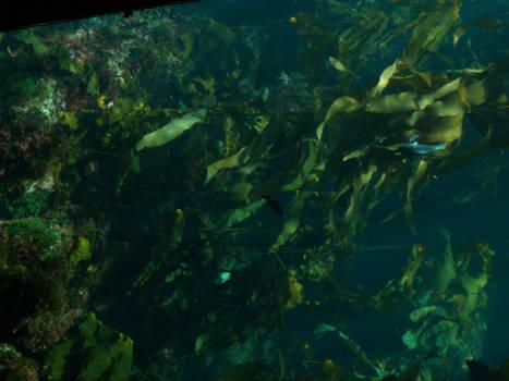 Underwater 12