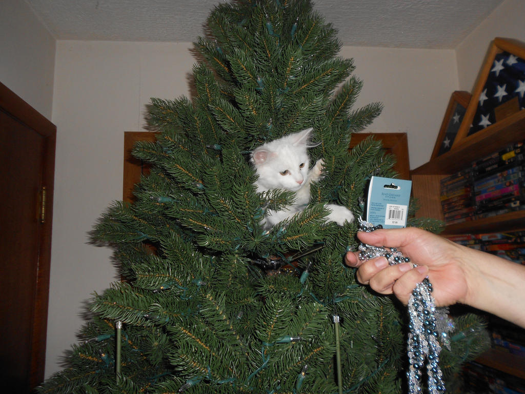 Kitten in a Christmas Tree 3 by ulyferal