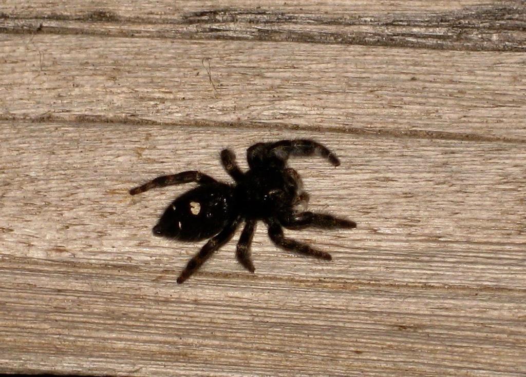 Spider 11/28/16 by acurmudgeon
