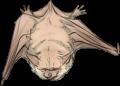 Cream Bat by TokoTime