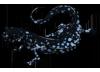 Blue Salamander by TokoTime