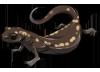 Yellow Salamander by TokoTime