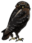 Melanistic Burrowing Owl by TokoTime