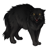 Black Cat Companion