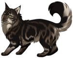 Maine Coon Cat by TokoTime