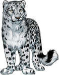 Snow leopard by TokoTime