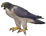 Peregrine Falcon Companion - Regular by TokoTime