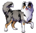 Blue Merle Australian Shepherd Companion by TokoTime