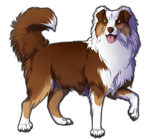 Red Tri Australian Shepherd Companion by TokoTime