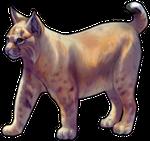 Bobcat by TokoTime