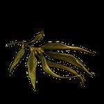 Kelp by TokoTime