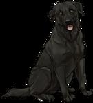 Black Labrador Companion by TokoTime