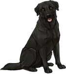 Black Labrador Companion by TokoTime