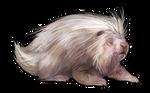 Albino Porcupine Companion by TokoTime
