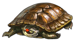 Red Ear Turtle Companion by TokoTime